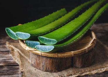 Les vertus de l'aloe vera pour la cosmétique